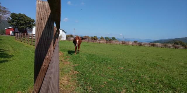イーストスタッド 種牡馬1.jpg