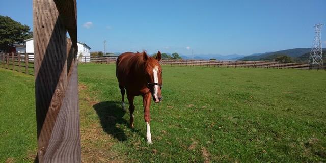 イーストスタッド 種牡馬2.jpg