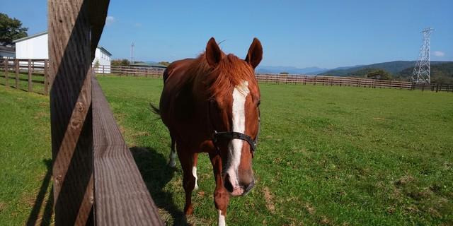イーストスタッド 種牡馬3.jpg